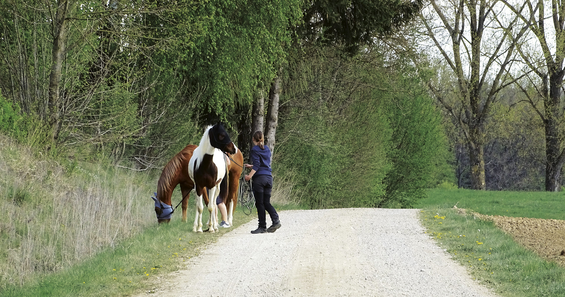 Pferde am Weg